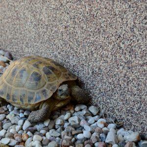 odwiedziny żółwi