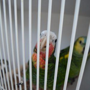Wystawa ptaków egzotycznych