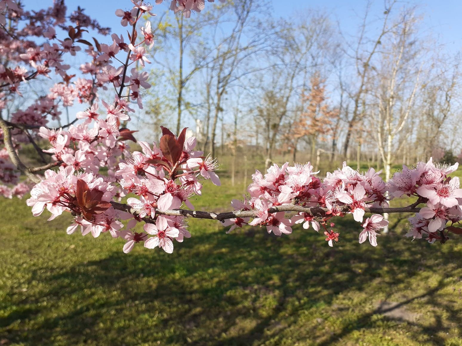 wiosenny park